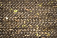 Metal mesh netting. Close-up full frame Stock Photography