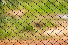 Metal mesh wire fence Royalty Free Stock Photos