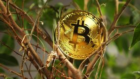 Metal Bitcoin on Plant Branches Created As Cryptocurrency stock video