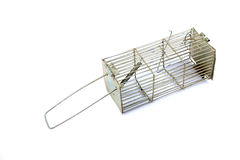 Metal mouse trap Stock Image