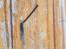 Metal nail in wooden plank Royalty Free Stock Images