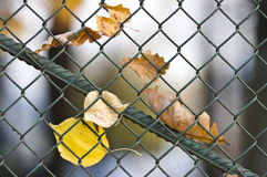 Metal net fence Royalty Free Stock Photography