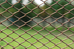 Metal net with green Royalty Free Stock Images