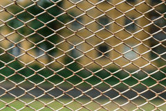 Metal net with Stock Photo