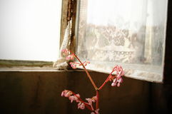Metal open window with flower. Old abandoned house metal and glass open window with a little pink flower next to it Stock Images