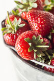 Metal Pail Filled with Ripe Strawberries. Elevated, angled close up view of fresh ripe strawberries with leaves and stalks, piled high in a metal pail bucket royalty free stock photo