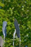 Metal plumes. Metal sculpted detailed plumes and blurred plants in the background Royalty Free Stock Photo