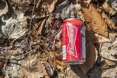 Budweiser beer metal can polluting the forest
