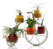 Metal pot. Looking like a bicycle with flowers isolated on white Royalty Free Stock Photos