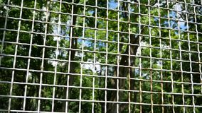 Metal rusty mesh through which you can see the green trees and the sky stock video