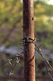 Metal rusty pole with barbed wire Royalty Free Stock Images