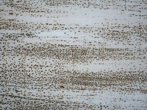 Metal rusty surface Royalty Free Stock Image