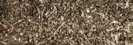 Metal shavings Stock Images