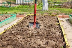 Metal shovel in the ground in the  seedbed. Stock Photos