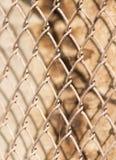 Metal siatka na drewnianym tle Obrazy Stock