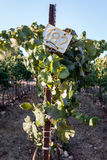 Metal sign in a vineyard Stock Image