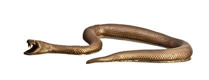 Metal snake Royalty Free Stock Image
