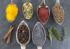 Metal spoons with various ground spices on slate background Stock Images