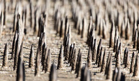 Metal stakes as background Royalty Free Stock Photo