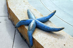 Metal Starfish Royalty Free Stock Photos