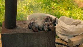 Metal stove with cedar cones. Burn out stock footage