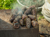 Metal stove with cedar cones burn out Stock Photos
