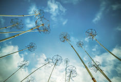 Metal structures in the form of dandelion flowers royalty free stock photos