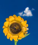 Metal sunflower against blue sky Stock Photo