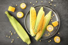 Metal tray and fresh corn cobs. On table Stock Photography