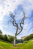 "Metal tree, ""Graft""( 2008-2009) Royalty Free Stock Photography"