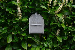 Metal US Mail box. Almost hidden among some foliage is a metal US Mail box stock image