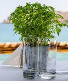 Metal vase with green plants and two empty glasses Royalty Free Stock Photo