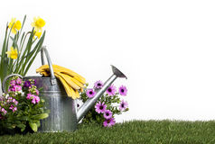 Metal Watering Can and Flowers Royalty Free Stock Images