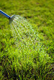 Metal watering can used to water the grass Stock Photo