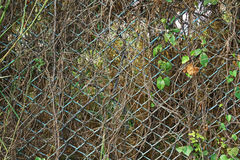 Metal wire fence Stock Images