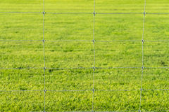 Metal wire fence and grass background Royalty Free Stock Photos