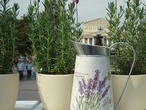 Metall som bevattnar kan för att bevattna bland olika blommor och växter royaltyfri fotografi