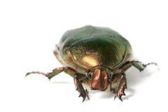 Metallic bug Stock Images