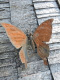 Metallic butterfly Stock Images