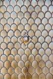 Metallic door pattern Stock Photos