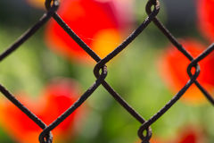 Metallic fence on the background of flowers. Metallic fence in a grid on a background of red flowers, macro shooting Royalty Free Stock Images
