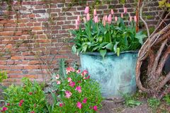 Metallic flower pot with grape hyacinths in front of a bricked wall stock images