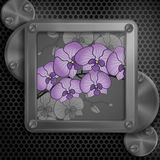 Metallic Frame With Screws Royalty Free Stock Photography