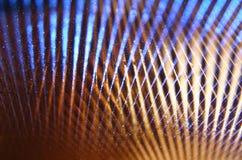 Metallic glitter vintage lights background. defocused. Royalty Free Stock Photography