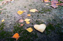 Metallic heart on stone among autumn leaves with small depth of Stock Images