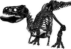 Metallic Jurassic. A stylish metallic dinosaur skeleton Stock Photography
