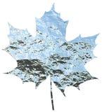 Metallic maple leaf Royalty Free Stock Photography