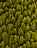 Metallic nanostructures. Nanowires on nickel created by powerful laser beam Stock Images