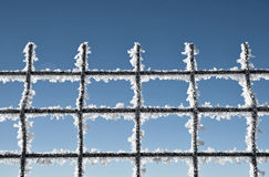 Metallic net covered with hoarfrost. Extreme cold weather concep Royalty Free Stock Image