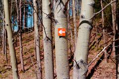 Orange sign with an arrow on attached to a tree. Direction sign. royalty free stock image